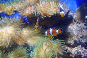 Viaje buceo Mar Rojo  Hurghada