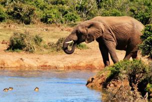 Viaje buceo Sudáfrica, Protea Banks y Aliwal Shoal (Safari de tierra opcional).