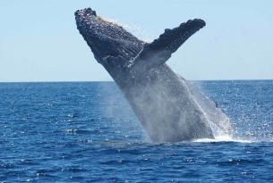 Noruega: Islas Lofoten y Safari de Ballenas
