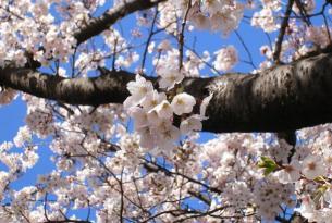Tokio y Kioto Las dos gigantes de Japón a tu aire (Especial Singles)