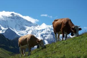 Descubre la Selva Negra (Alemania) y Suiza en grupo exclusivo para Singles
