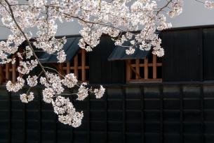 Semana Santa en Tokio y Kioto a tu aire