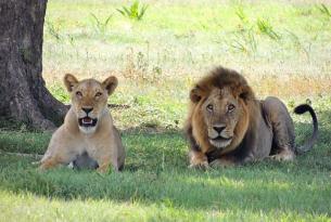Navidades en  Kenia descubriendo el Masai Mara, los montes Aberdare y más