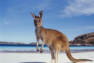 Australia Experiencia Kangaroo (22 días)